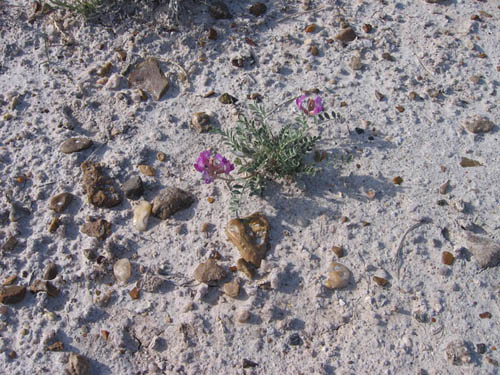 Wildflowers Badlands Unknown 6