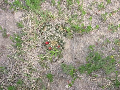 Wildflowers Badlands Unknown 3